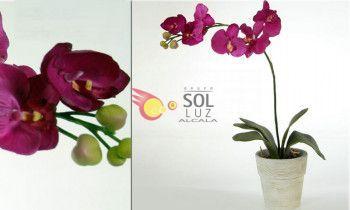 Maceta de orquídea fucsia